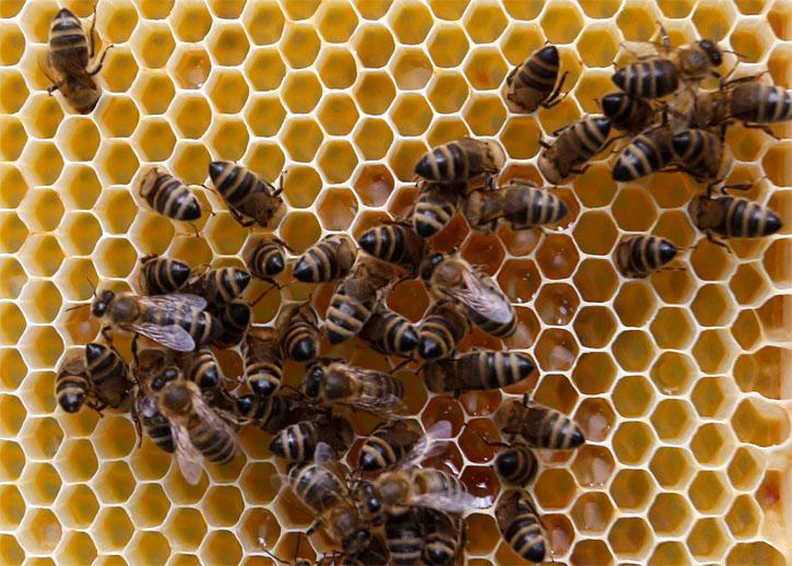 bičių parinktys