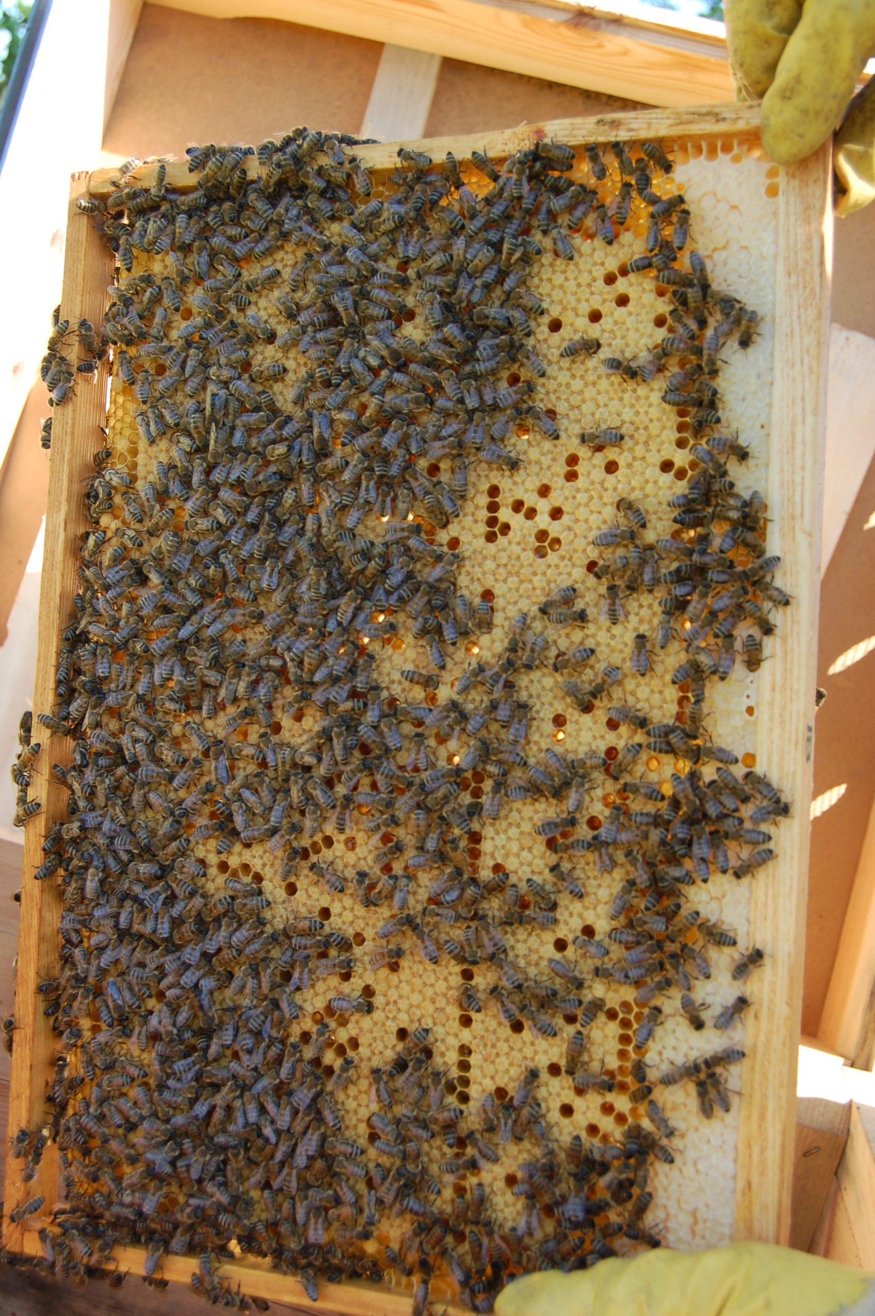 bičių parinktys)